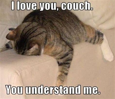 Best Cat Memes - best cat memes on the internet top mobile trends