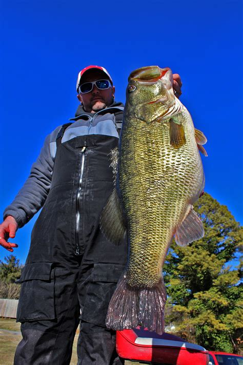Tennessee Records New Tennessee Record Bass Officially Certified Rhea Review
