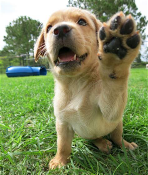 southeastern guide dogs faqs southeastern guide dogs walkathonsoutheastern guide dogs walkathon