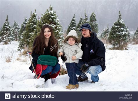 you cut christmas tree farms tree farm usa stock photos tree farm usa stock images alamy