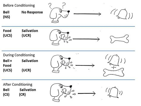 classical conditioning diagram 301 moved permanently
