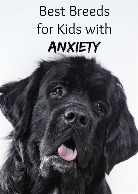 best dogs for anxiety best breeds for with anxiety anxiety kid and best dogs