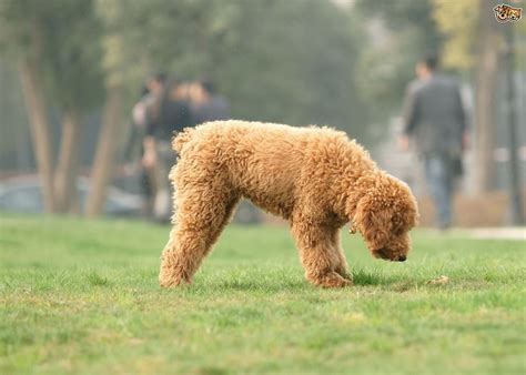 top dog breeds 10 of the most popular small dog breeds within the uk