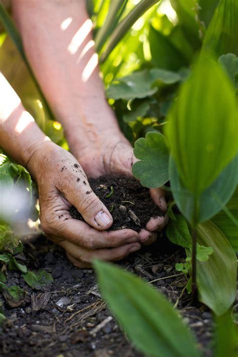 best soil for growing vegetables soil preparation for