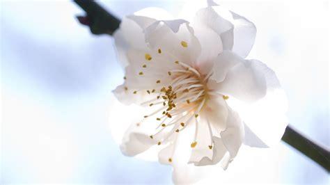 flower bloom bright branch plant hd wallpaper 1920 x 1080 wallpaper 1920x1080 flower bloom bright branch