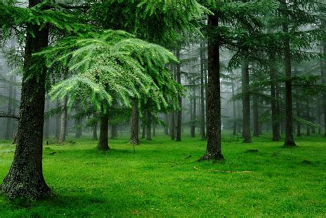 wallpaper of green forest 20 forest backgrounds wallpapers free creatives