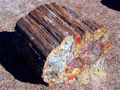 washington state gemstone washington gem petrified wood