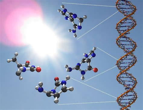 Uv Light Damages Dna By Causing by How Do Dna Components Resist To Damaging Uv Exposure