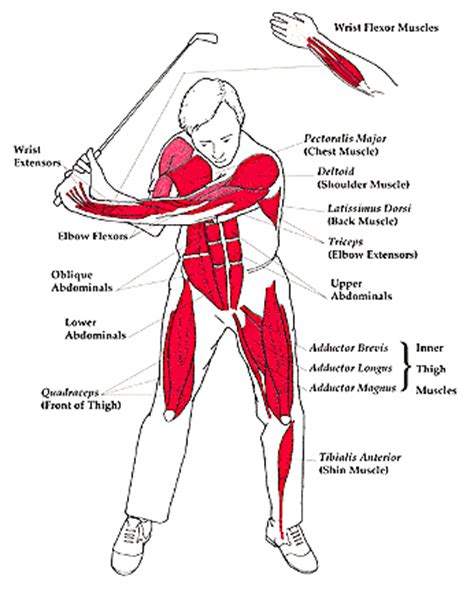 best exercises for golf swing a proper golf swing engages many muscles golfgearreview com