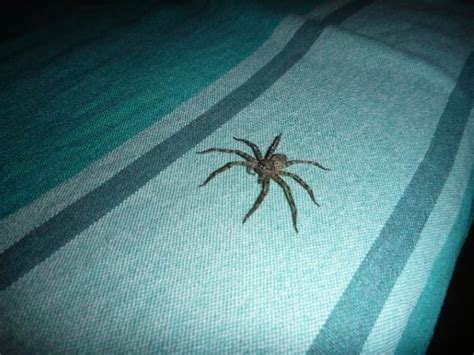 Spider Bed by Bad Spider On Pete S Bed Arambol Goa India
