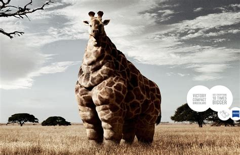 Imagenes De Jirafas Gordas | la jirafa m 225 s gorda del mundo
