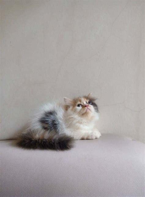 Berapa Obat Cacing Kucing tahapan pertumbuhan kucing dari kitten sai dewasa