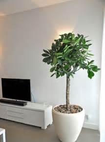plantas interior adorna tu casa con plantas decorativas para interiores