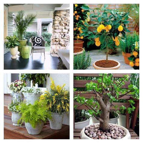 Superbe Idee De Decoration De Noel Exterieur #5: plantes-en-pot-pour-espace-exterieur.jpg