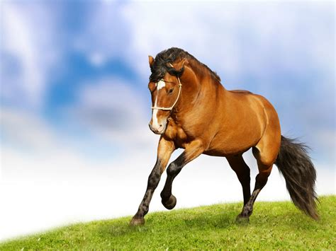 an horse horses hd wallpapers horse desktop wallpapers 1080p hd