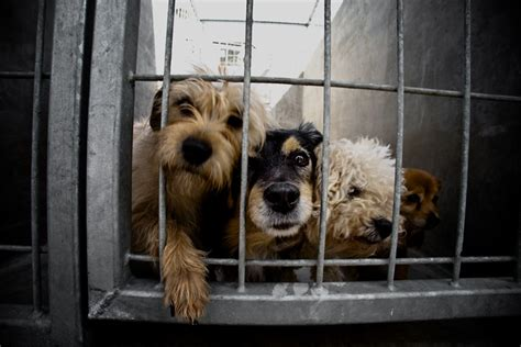 shelter for dogs adopt a shelter month stingy thrifty