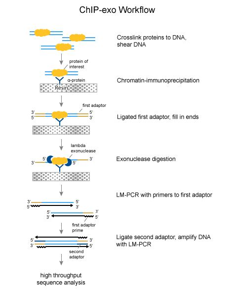chip qpcr protocol chip 2 0 guide to advanced chromatin immunoprecipitation