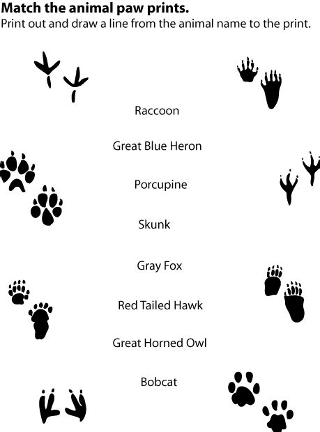 printable animal footprint matching game animal tracks match up