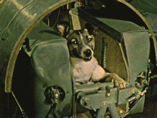 laika  dog   animals  space space