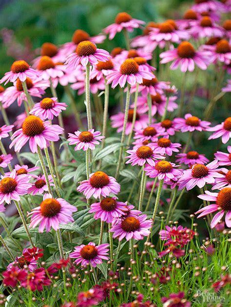 fall blooming perennials on pinterest perennials best 25 best perennials ideas on pinterest perennial
