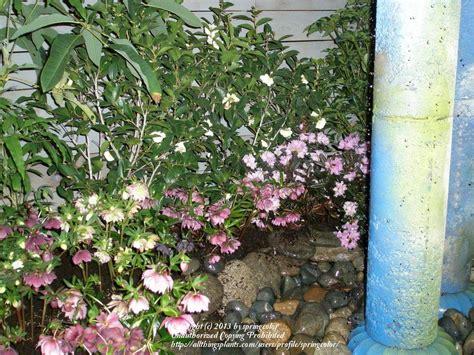 pacific northwest flower and garden show pacific northwest flower and garden show the 2014