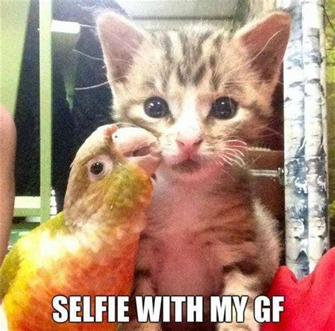Popular Cat Memes - best cat memes that s too funny