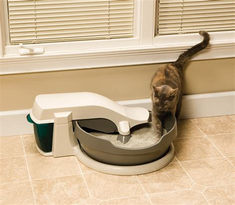 auto litter box 5 reasons to automatic litter boxes petsafe 174 articles