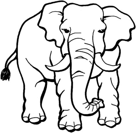 Galerry coloring page baby elephant