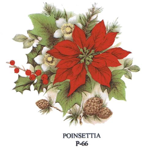 google images poinsettia pin by diane mcrobert on christmas pinterest