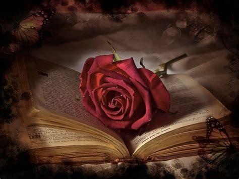 libro rosa de cendra frasi libri sulla vita