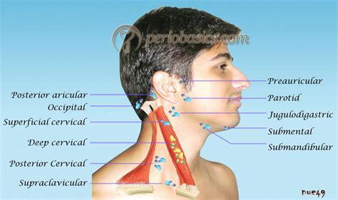 cervical lymph nodes diagram lymph nodes in neck diagram location anatomy organ