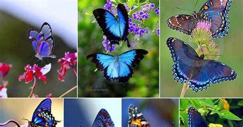 tato kupu kupu sederhana cari gambar cantik aneka kupu kupu