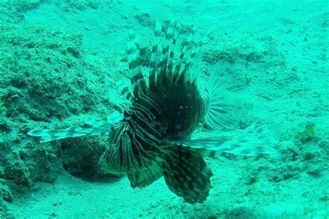ningaloo reef dive ningaloo reef dive 1 scuba dive in perth australia