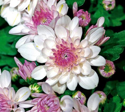 fiori a novembre in edicola dal 23 ottobre casa in fiore di novembre cose