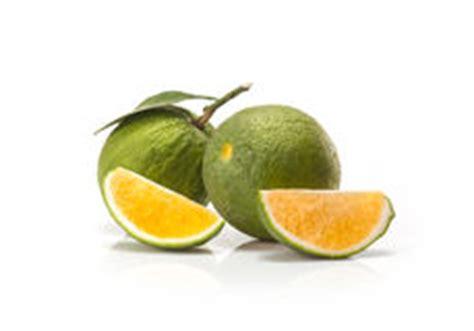 imagenes de naranjas verdes fruta verde dulce de las naranjas foto de archivo imagen