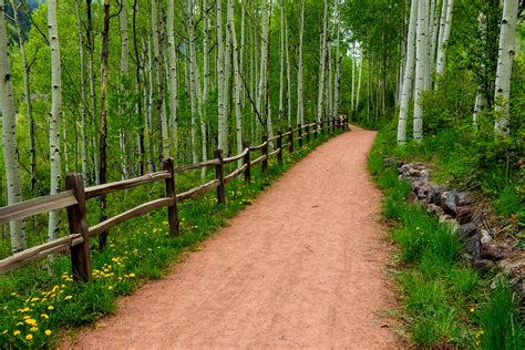 the wood for the trees one s view of nature books path time nature woods trees forest