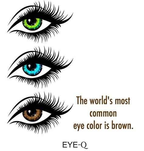 facts about eye color the world s most common eye color is brown eyefacts