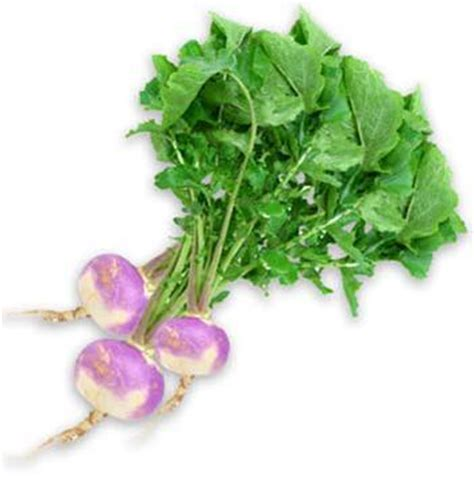 bitter root vegetable farm to school s veggie of the month turnip greens