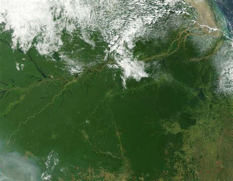 amazon nz the amazon rainforest
