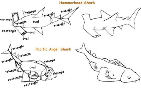 angel shark coloring page pacific angel shark and hammerhead shark sketches unit