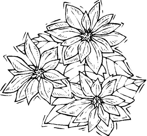 Flower Poinsettia Coloring Pages Poinsettia Coloring Page