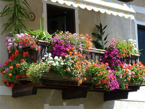 aldo davanzali un davanzale fiorito a st valburga aldo furlanetto flickr