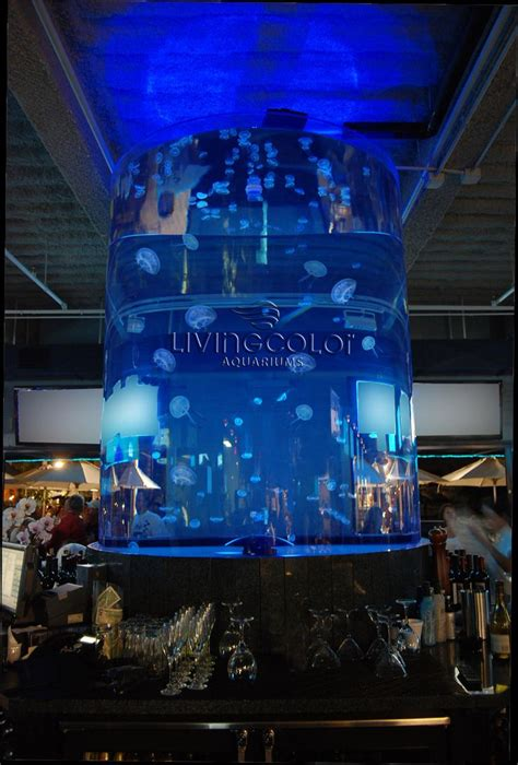 fish tank bar top 71 best images about fish tanks on pinterest saltwater