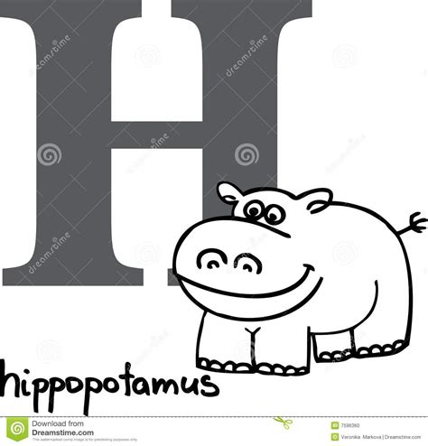 4 Letter Words Hippo animal alphabet h hippo stock photo image 7596360