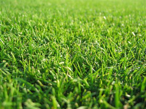 Green Grass by Background Wallpaper Green Grass