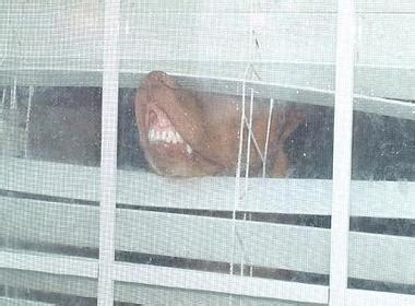 dogs smushing  faces  windows ruin  week