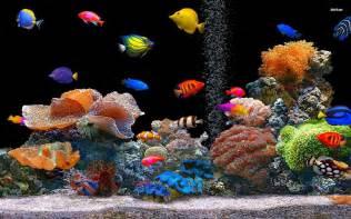 Tropical Fish School Desktop Animal 1920 X 1080 Oscar Fish Desktop