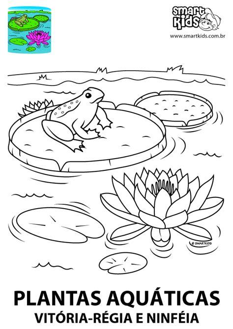 desenho de plantas colorir desenho plantas aqu 225 ticas desenhos para colorir