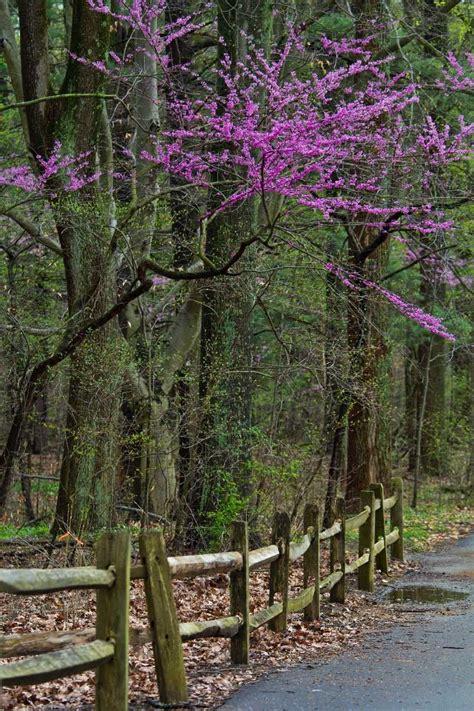 flowering trees  stay  pretty  spring