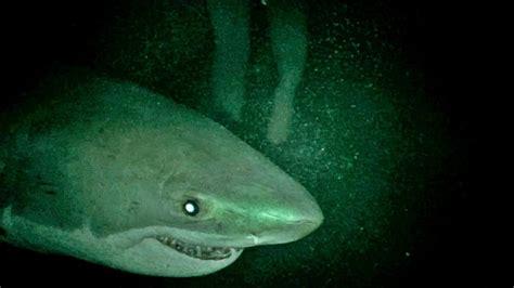 Open Water open water 3 il trailer italiano dell horror sugli squali